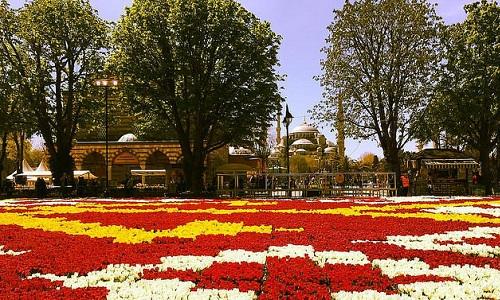 Фестиваль тюлбпанов в Стамбуле